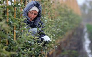 Заработная плата аграриев увеличилась почти в два раза