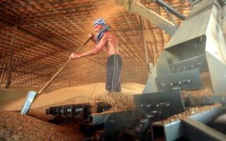 России больше не грозит рекордный урожай